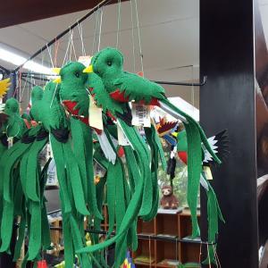 【コスタリカ】幻の鳥ケツァールを求めてinモンテベルデ自然保護区~サンタエレナからの行き方