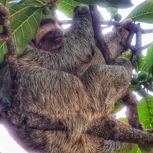 【コスタリカ】ナマケモノを求めて~ケポスからマヌエル・アントニオ国立公園へ~2020年情報