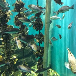 【おでかけ】こどもと2人で水族館と動物園に行ってきた