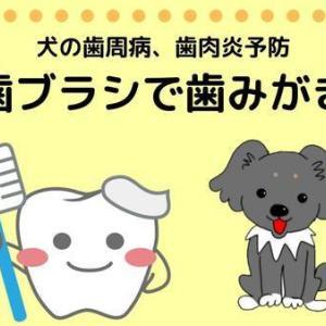 犬の歯石はカンタンに取れないから歯ブラシで予防しよ!