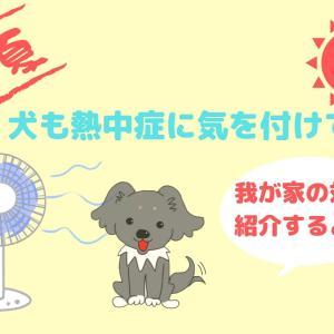 犬の熱中症対策|新鮮なお水とエアコン24時間稼働