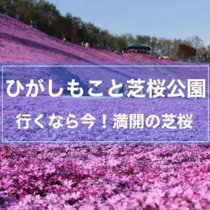 【ひがしもこと芝桜公園】今が見頃!丘一面をピンクに染める見事な芝桜