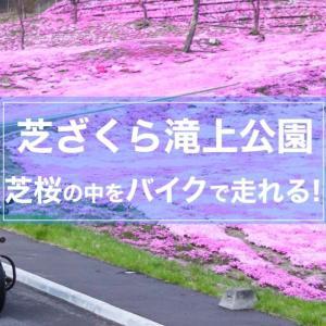 2019【芝ざくら滝上公園】今が見頃!日本一の芝桜の開花状況や駐車場まとめ