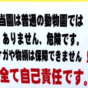 【ノースサファリサッポロ】超危険な動物園に潜入!北海道札幌の近くで特別な体験ができる!