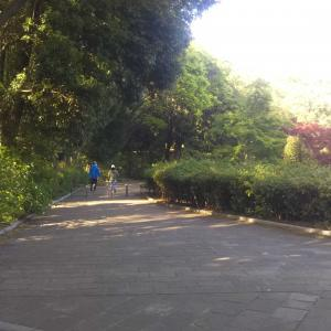 散歩勉強法