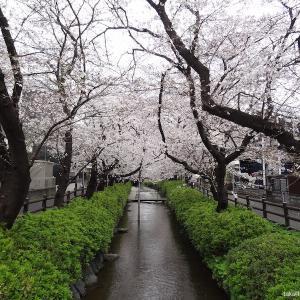 二ヶ領用水|徳川家康公が小泉次大夫に作らせた神奈川県最古の用水路