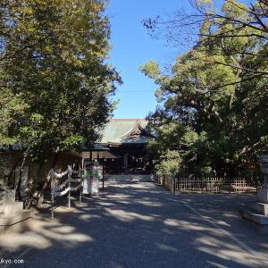 浜松八幡宮(静岡県浜松市)|敗走した徳川家康公が逃げ隠れた雲立楠
