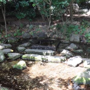 七井の池(東京都三鷹市)〜徳川家康公の好んだ水源