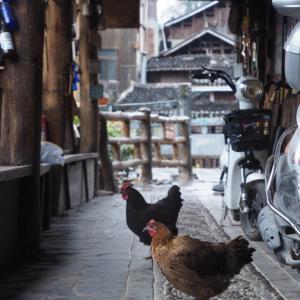 中国貴州省の少数民族トン族の村を散策!肇興村(肇興侗寨)は古民家溢れる川辺の静かな村だった