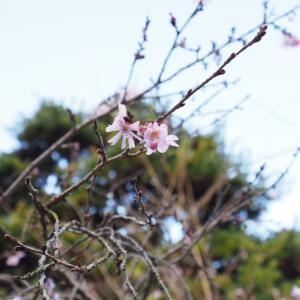 ついに愛媛県に突入!お遍路第65番「由霊山 慈尊院 三角寺」は三角の池を持つ神聖な山寺だった
