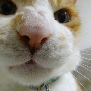 ひああぁ~~
