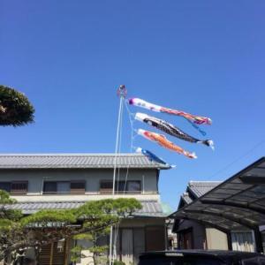 袋井市、Y様の最高級鯉のぼり 慶祝の鯉 吉兆が揚がりました!