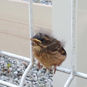 鳥さんいました