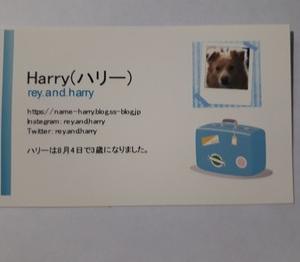 ハリーの名刺つくりました