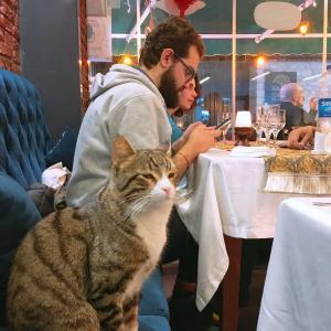 猫の街、イスタンブール 二日目、激動の5カ国旅、2020、3月
