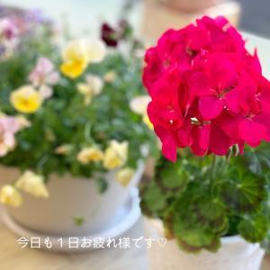 可愛いお花に癒されて。今日も1日お疲れ様です。