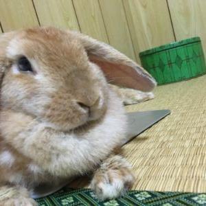 どんなに落ち込んでいても癒してくれるうちのウサギの話