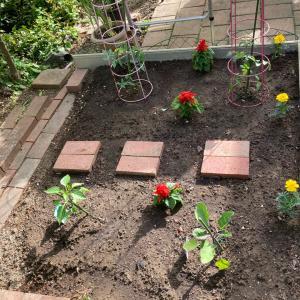 坪庭菜園の夏野菜
