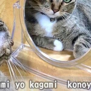 【ภาษาญี่ปุ่นญี่ปุ๊นญี่ปุ่น】กระจกวิเศษ จงบอกข้าเถิดใครงามเลิศในปฐพี