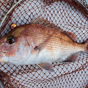 2019年9月14日 タイラバ釣行