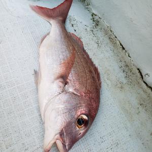 2020年9月27日 タイラバ釣行
