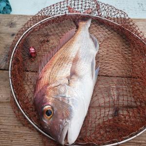 2020年10月4日 タイラバ釣行