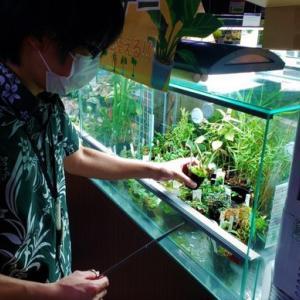 観葉植物の管理!