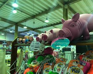 北谷店には豚がいっぱい
