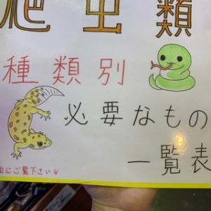 爬虫類の飼育に必要なもの図鑑作成!!