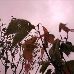 秋色に 染まる