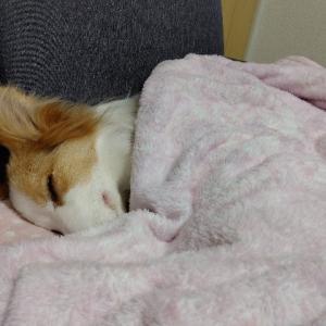 我が家の毛布おばけ