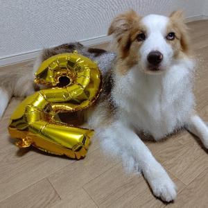 ベル2歳の誕生日♡