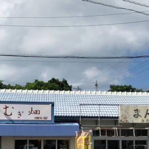 むぎ畑(今帰仁村)