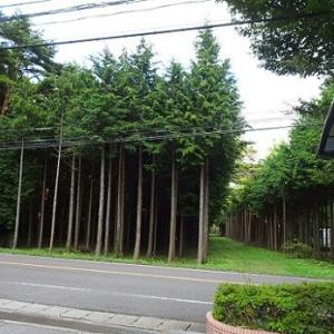那須 板室温泉の旅 ~ホテル板室前の松林~