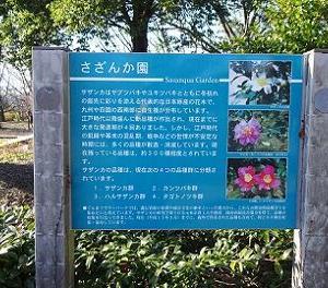 渋川の旅 ~フラワーパーク さざんか園~