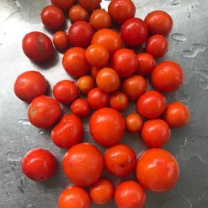 大量のトマトの処理の仕方