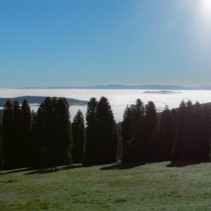 ダンデノン丘陵 - R.J. Hamer 樹木園 で雲海 (Olinda)