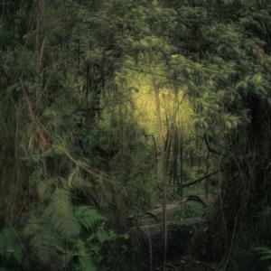 ダンデノン丘陵 - シャーブルックの森(Sherbrooke)1