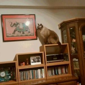 猫禁食 (2)