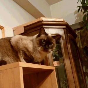 空飛ぶデブ猫