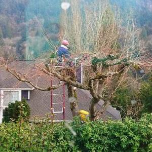 木に登っての桜木の剪定 ~ ビールに合う献立で NFLTB感染TV 観戦