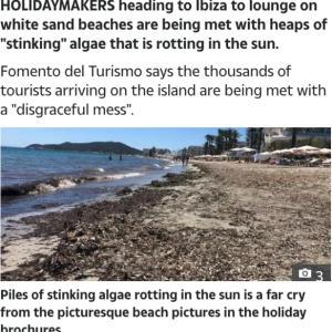 IBIZAの海 藻が沢山。。。
