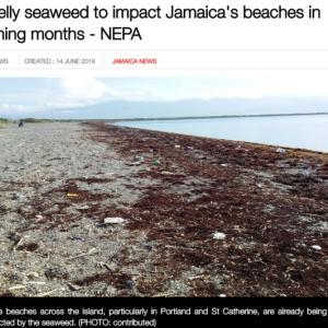 カリブ海 海草が大量発生、、、