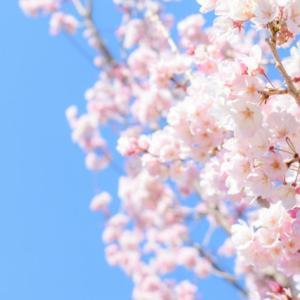 【募集開始】4月のzoomダンシャベリ会