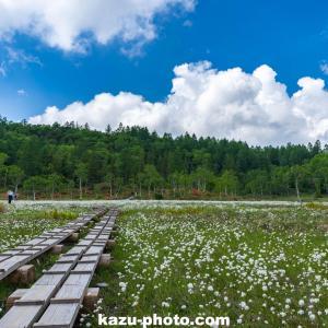 【志賀高原】ワタスゲ咲く田ノ原湿原を撮影@長野の絶景スポット!