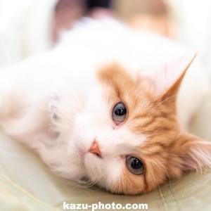東京の吉祥寺で人気の猫カフェ!@てまりのおうち&てまりのおしろ
