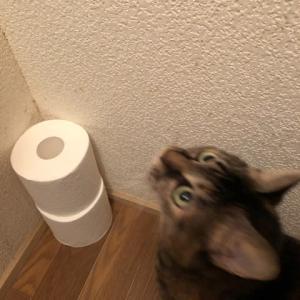トイレの中も見守り隊