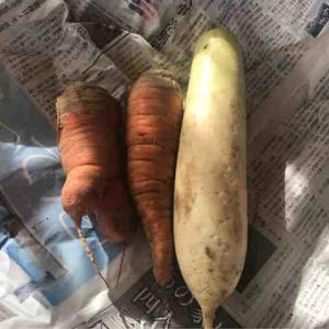 お野菜がおいしい季節ですね♪旬の食材をたっぷり食べるといいことが!!