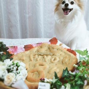 パン工房PIYOPAN看板犬U^ェ^Uぴよちゃんお誕生日おめでとう