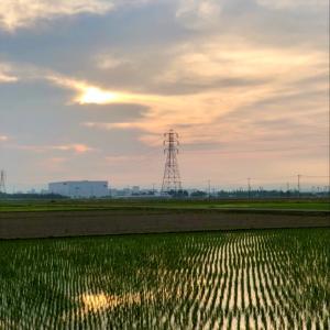 曇天に薄日差す水田と鉄塔 ・ 6月5日金曜日